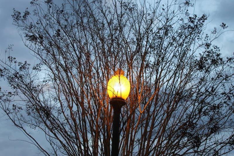 灯和branchs在街道 库存图片