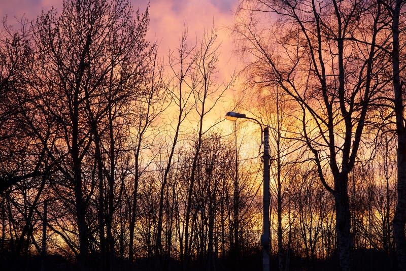 灯岗位和树在日落背景 室外 库存照片