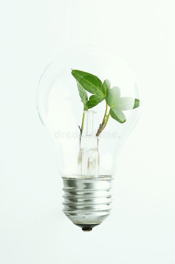 绿灯电灯泡 库存图片