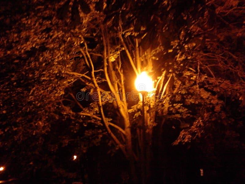灯笼晚上 免版税图库摄影