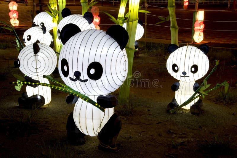 灯笼熊猫 库存照片