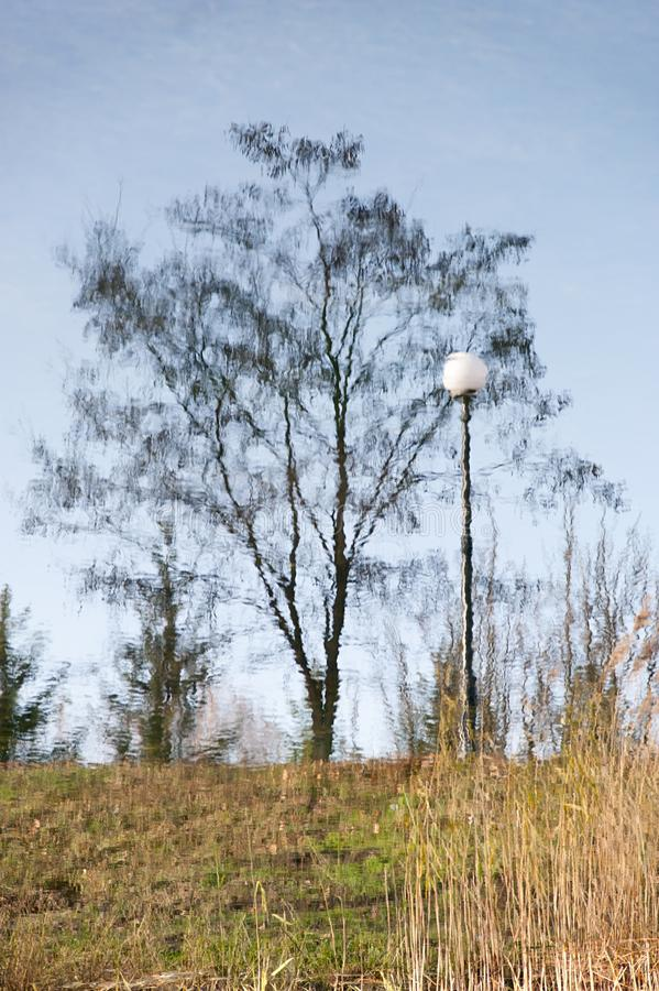 灯笼的显示和一棵树在水中 图库摄影
