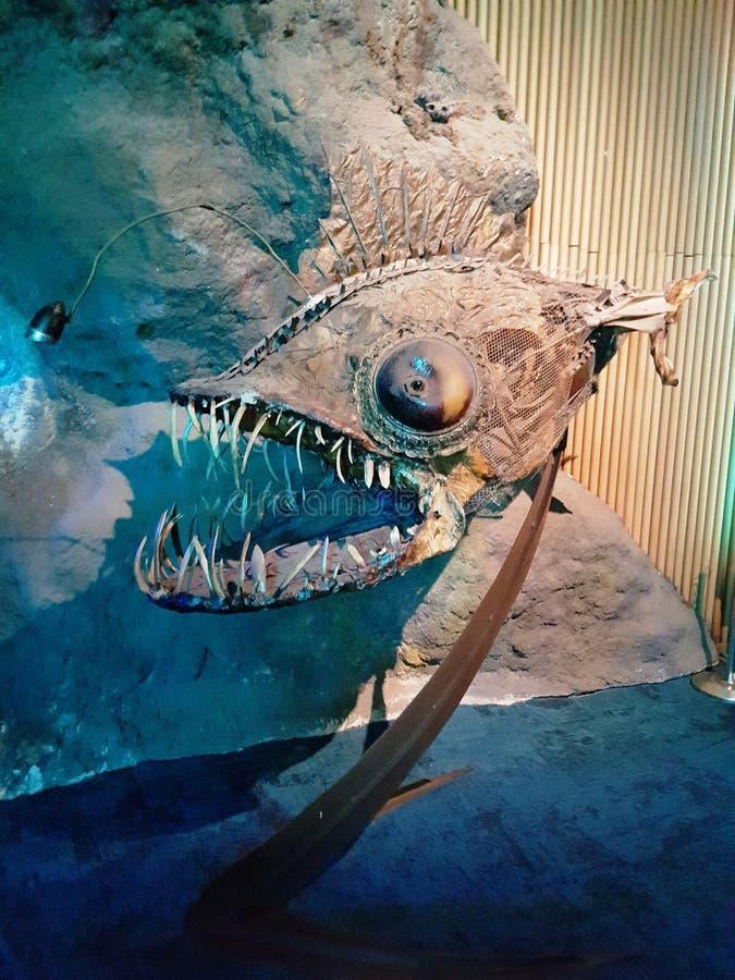 灯笼鱼化石 免版税库存照片