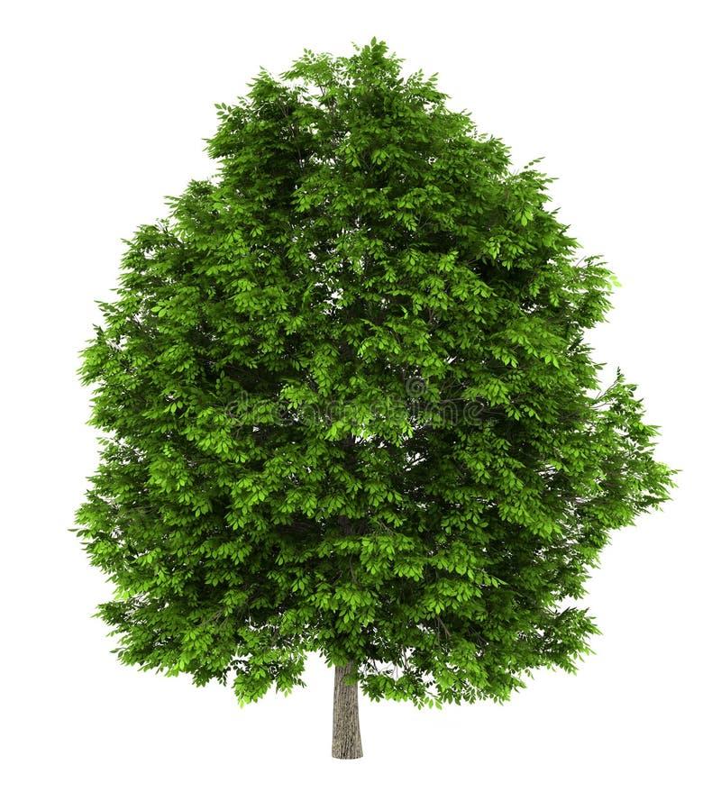 灰欧洲查出的结构树白色 向量例证