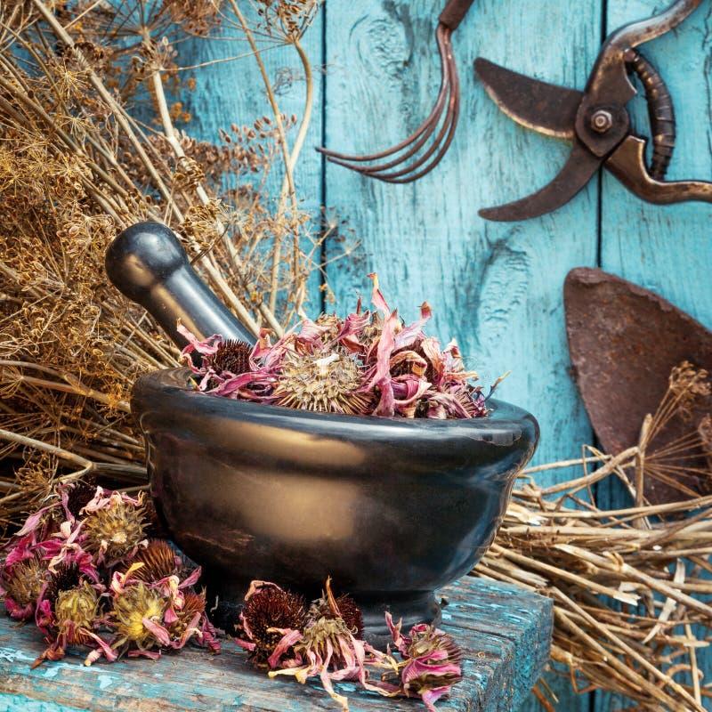 灰浆用干医治草本和园艺设备 库存照片
