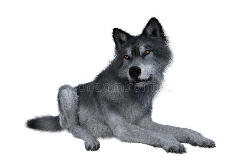 灰狼放松 免版税图库摄影