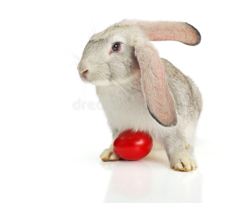 灰色兔子用红色复活节彩蛋 免版税库存照片