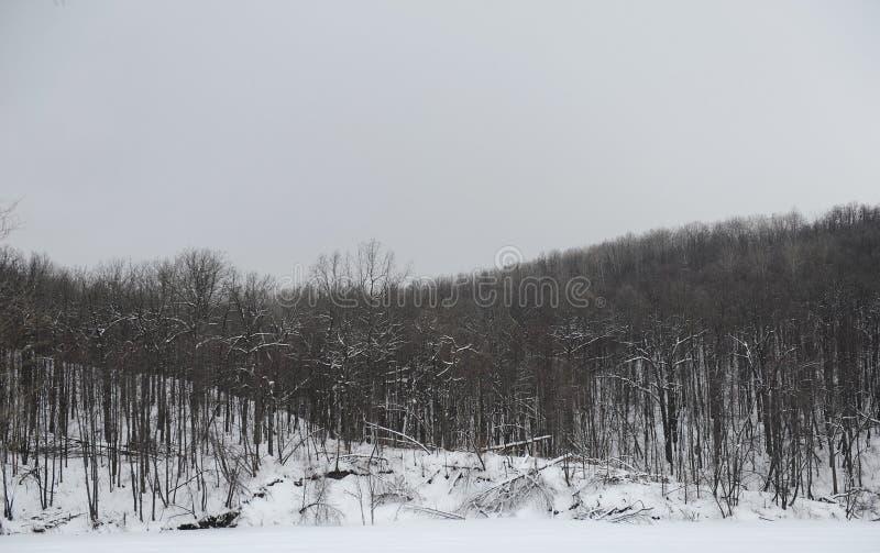 灰色单色冬天风景 免版税图库摄影