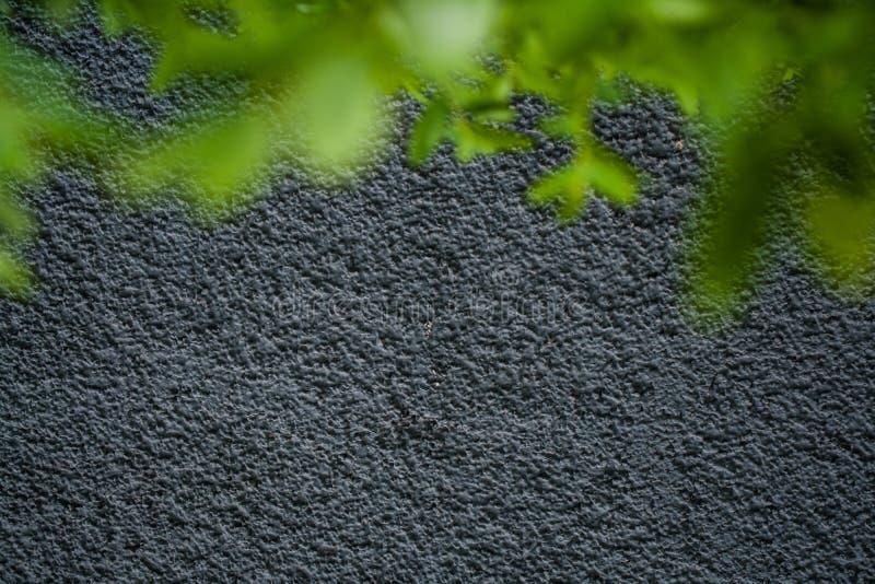 灰色单音背景或纹理与坎坷 蓝色树荫 在墙壁上的膏药 灌木鲜绿色的叶子  库存照片