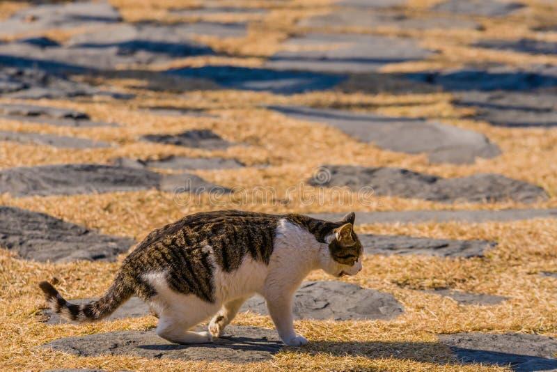 灰色和白色虎斑猫特写镜头  库存照片