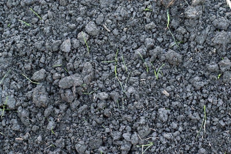灰色土壤用绿草新芽  库存照片