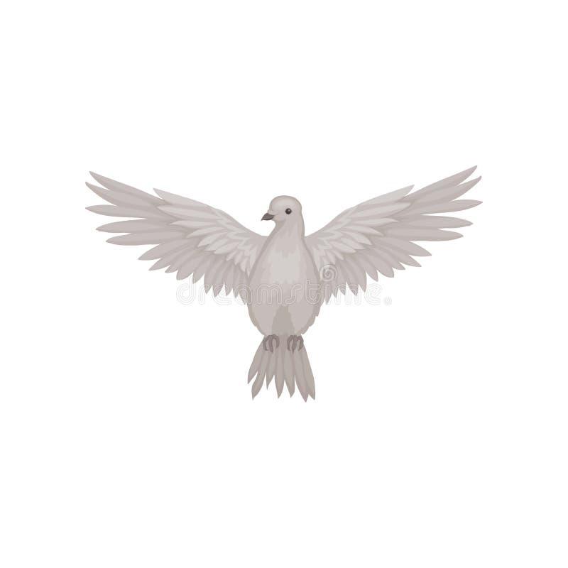 灰色在与大开翼的飞行的行动,正面图潜水 动物区系题材 海报或鸟类学书的平的传染媒介 皇族释放例证