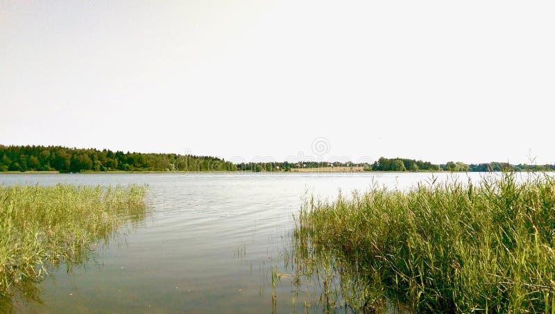 灰色水在有水草的一个森林湖 免版税图库摄影