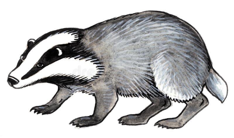 灰色浣熊 向量例证