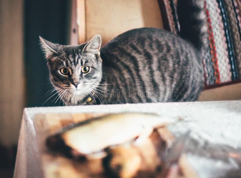 灰色猫和一条大鱼在桌上 免版税库存图片