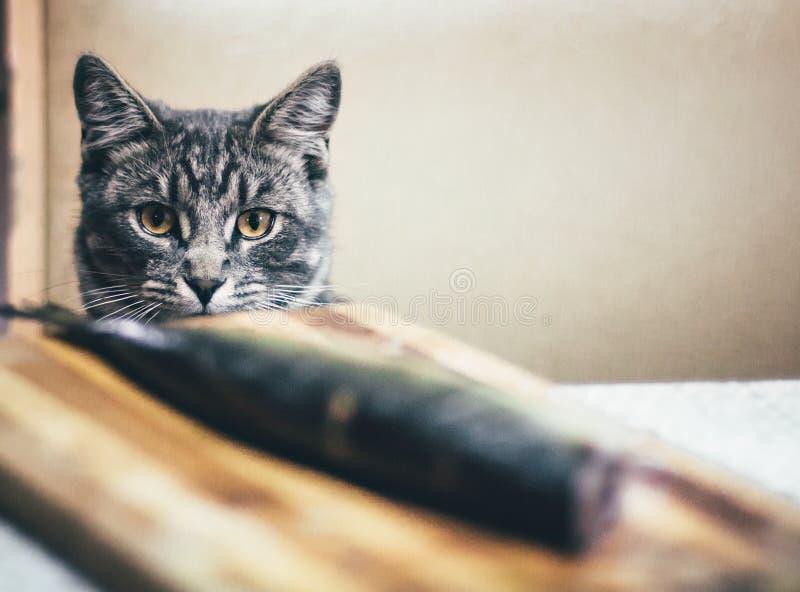 灰色猫和一条大鱼在桌上 免版税库存照片