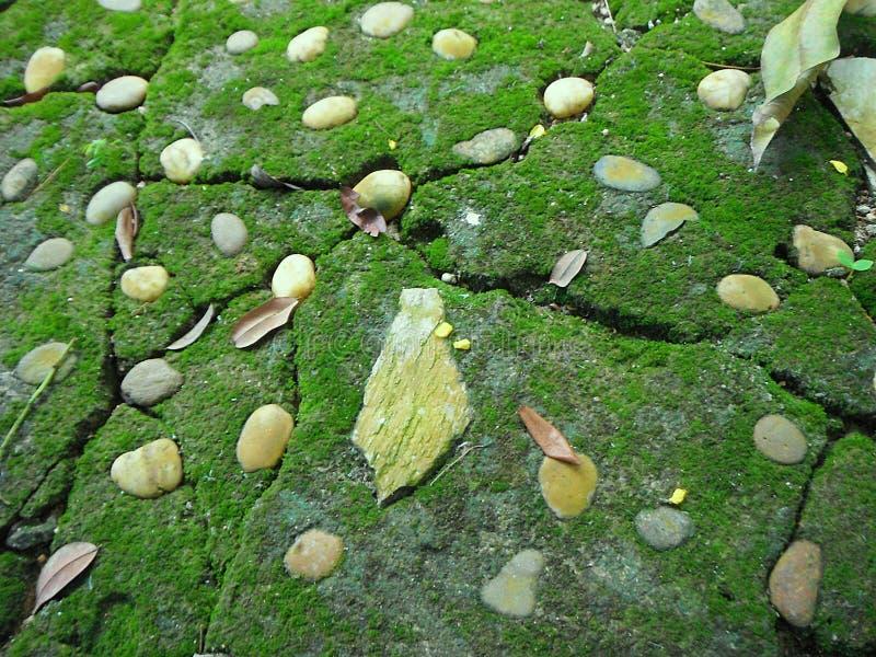 灰色石路面特写镜头与绿色青苔和岩石纹理的 免版税库存照片