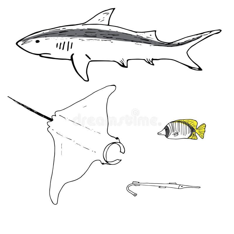 灰色礁石鲨鱼、披巾、马鲅手拉蝴蝶鱼和的cornefish 皇族释放例证