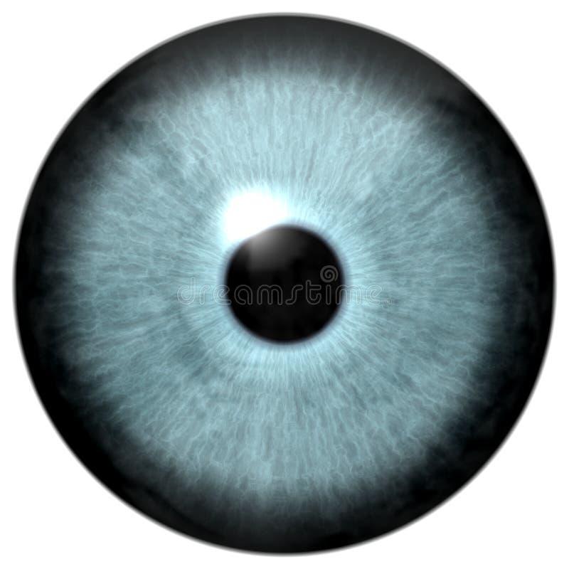 灰色绿色colorized眼睛动物纹理 免版税库存照片