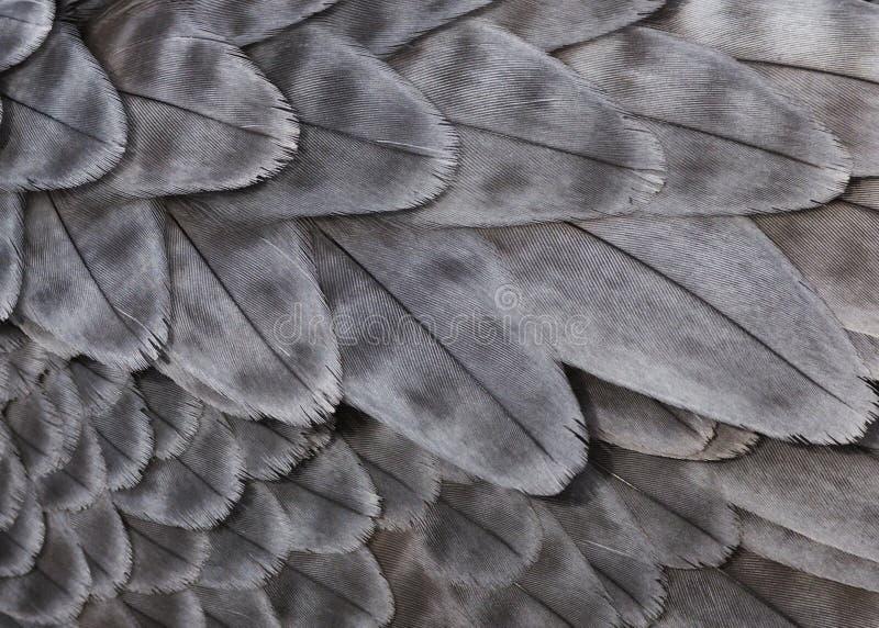 灰色羽毛 免版税库存照片