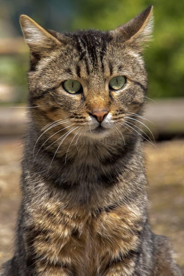 灰色街道猫关闭 库存图片