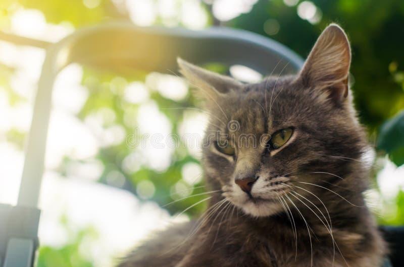 灰色逗人喜爱的猫看与蔑视和注意在bokeh背景  求知欲和不确定性 家猫观看 库存图片
