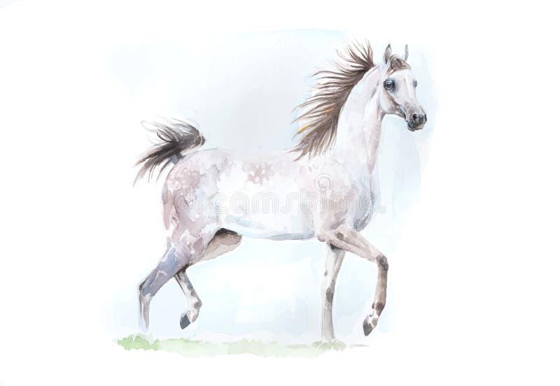 灰色阿拉伯马水彩绘画以传染媒介格式 库存图片