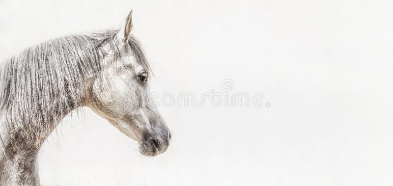 灰色阿拉伯马头画象在轻的背景,外形图片的 免版税库存图片