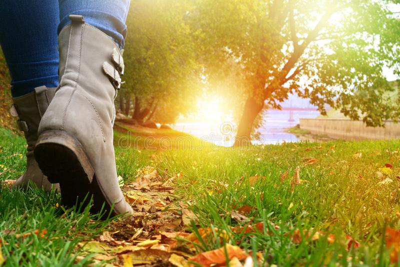 灰色鞋子和牛仔裤的妇女走在秋天森林道路的 库存图片