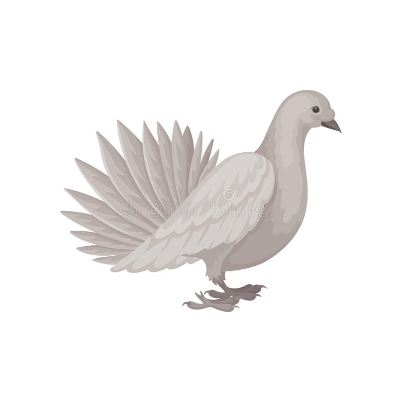 灰色鸠,侧视图 与蓬松尾巴的鸟 飞行生物 海报或横幅的平的传染媒介元素 库存例证