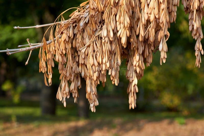 灰,被弄脏的背景分支与干燥种子的 免版税图库摄影