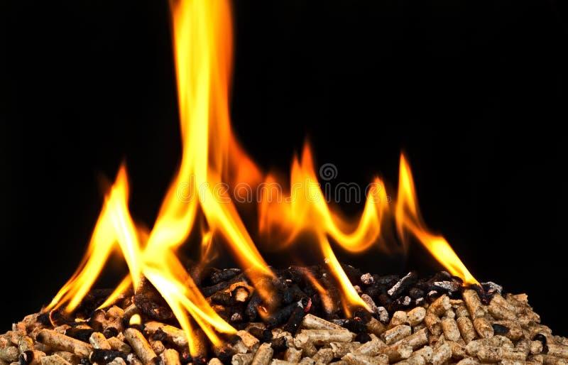 灼烧的木药丸 图库摄影
