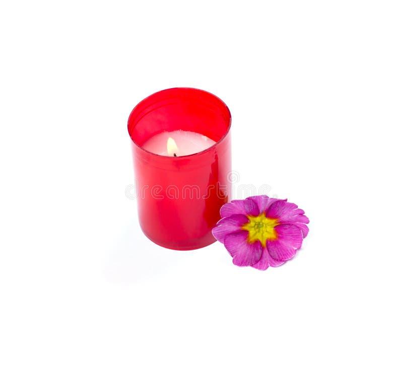 灼烧的红色蜡烛和桃红色花,孤立 库存图片
