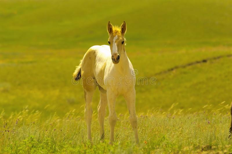 灿烂的马驹在一个夏日 免版税库存图片