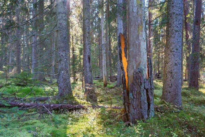 Download 黑点在森林里 库存照片. 图片 包括有 都市, 户外, 本质, 黑点, 视图, 沼地, 室外, 裂缝, 阳光 - 59112094