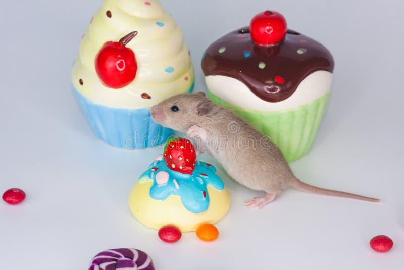 点心的概念 在五颜六色的甜点背景的鼠  库存照片