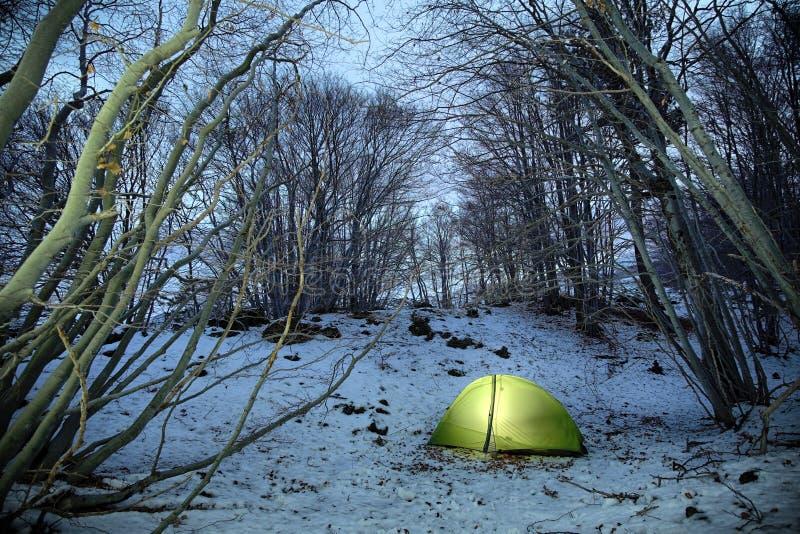 点燃在光秃的山毛举材的帐篷在微明的冬天 免版税库存照片