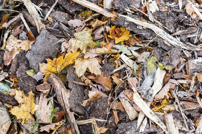 点燃的木和下落的叶子,秋天依托色的背景  免版税库存图片