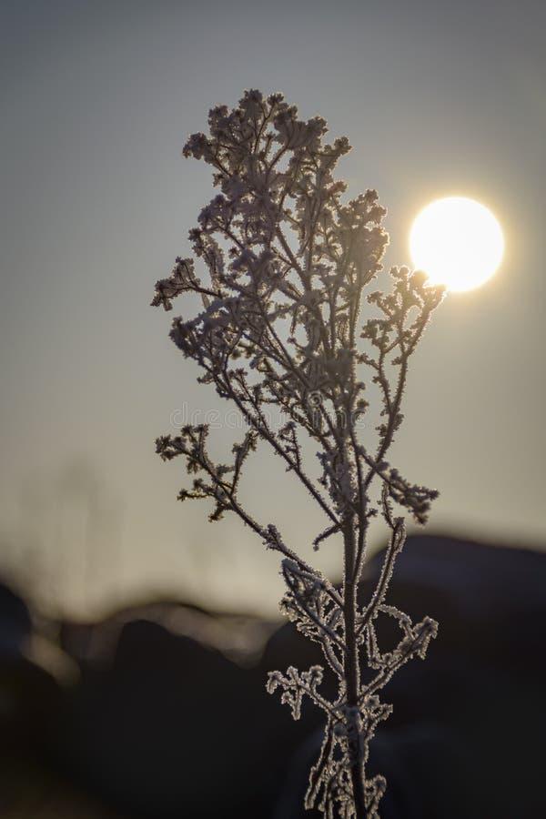 点燃这树冰的日出包括镇静风景的植物 图库摄影