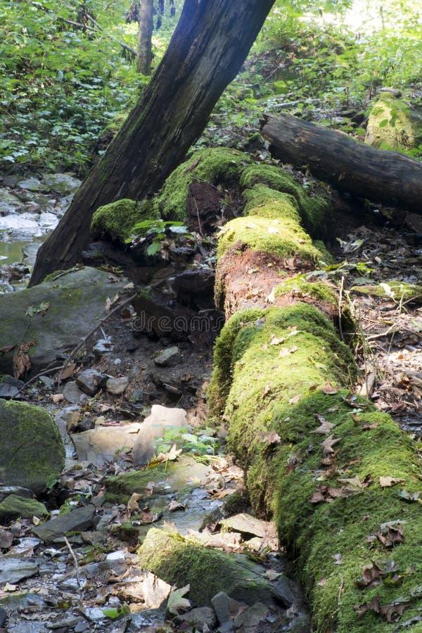 烂掉日志和下落的树 库存照片