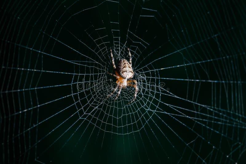 烈士蜘蛛 图库摄影