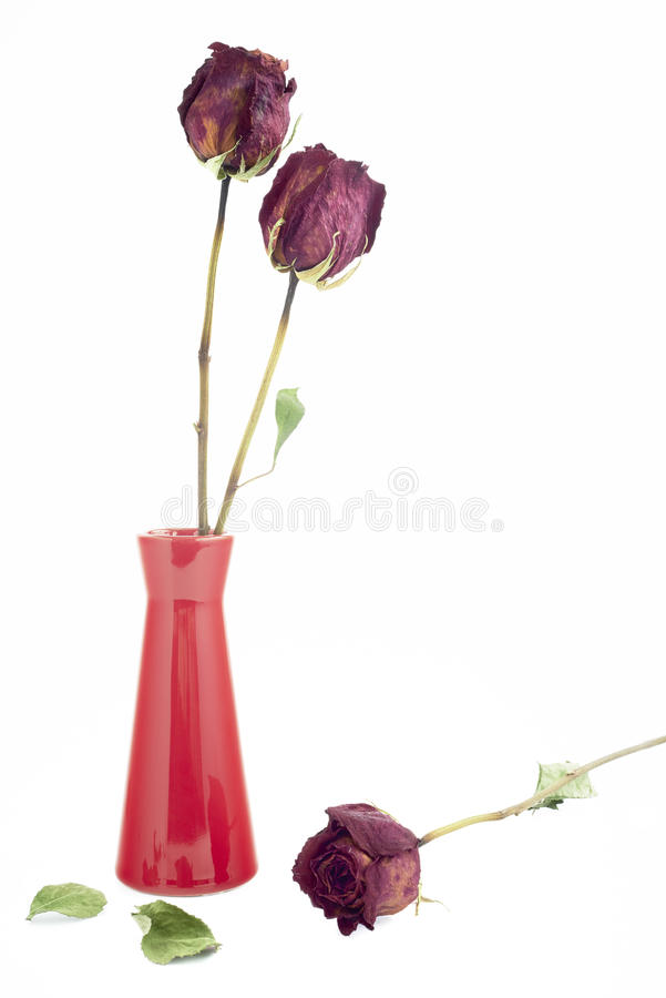 烘干三朵玫瑰 库存照片