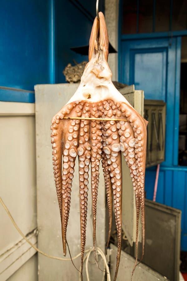 烘干传统希腊食物的章鱼在阳光下 库存照片