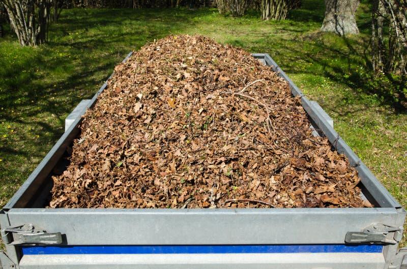 烘干在一辆小拖车装载的叶子 免版税库存照片