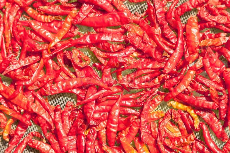 烘干在太阳的干红辣椒,在P的妇女的小组 免版税库存照片
