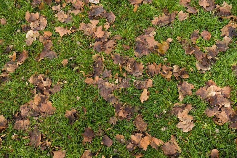 烘干在草的叶子 库存图片