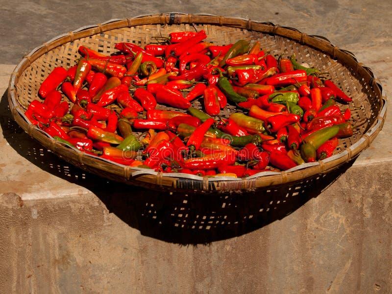 烘干在阳光下在不丹的红辣椒 免版税图库摄影