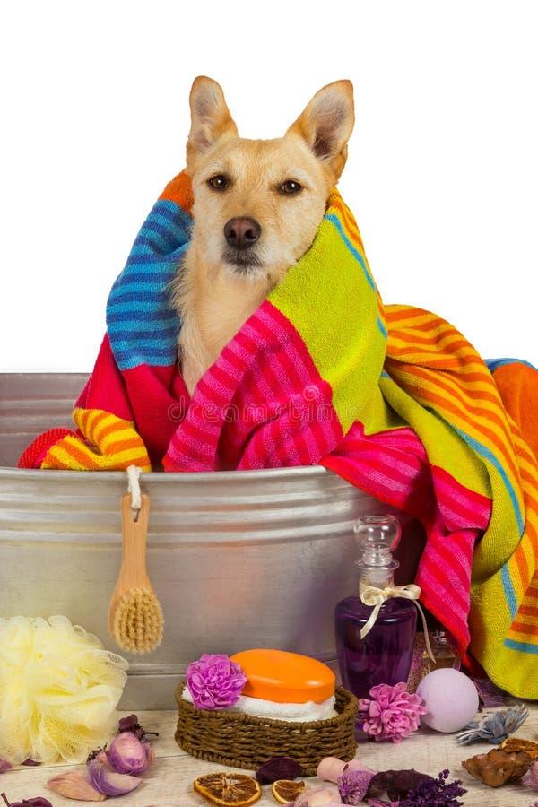 烘干在浴以后的逗人喜爱的狗 免版税图库摄影