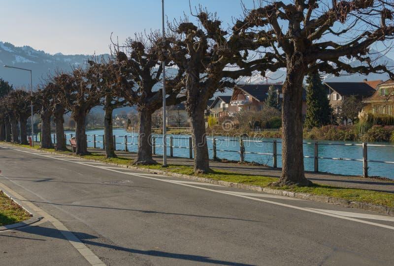 烘干树在烟特勒根 免版税库存照片
