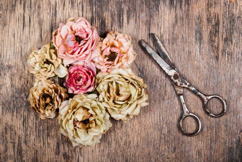 烘干桃红色花和生锈的剪刀在一个老木板 免版税库存照片